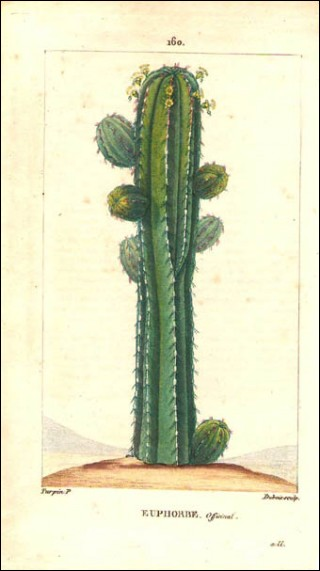 1815 P Turpin Saguaro Cactus Hand Colored Engraving